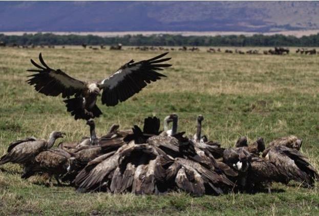 vultures_iStock_mogens-trolle_623-f4cdb19