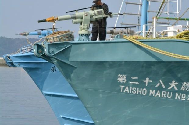 whaling_kazuhironogi_istock_623-778f4bd