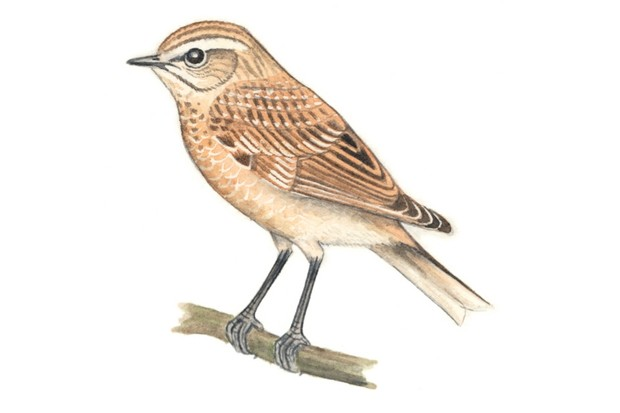 whinchat20Felicity20Rose20Cole20-cff3654