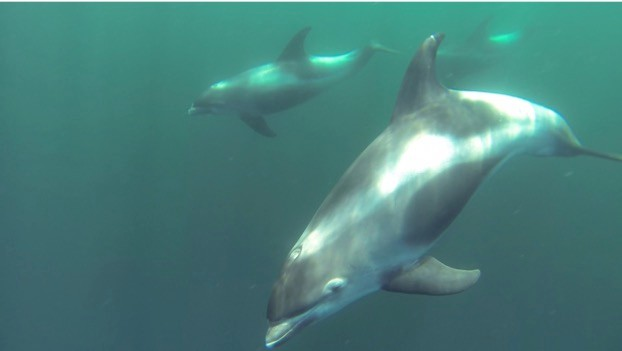 If you can't identify this dolphin, don't worry –you're probably not the only one.