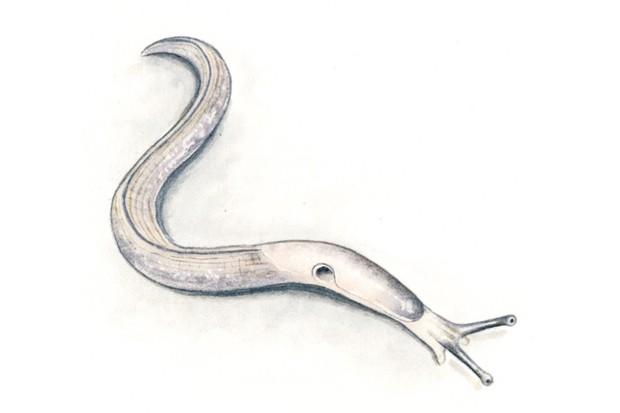 worm20slug_Felicity20Rose20Cole20-09db0e3
