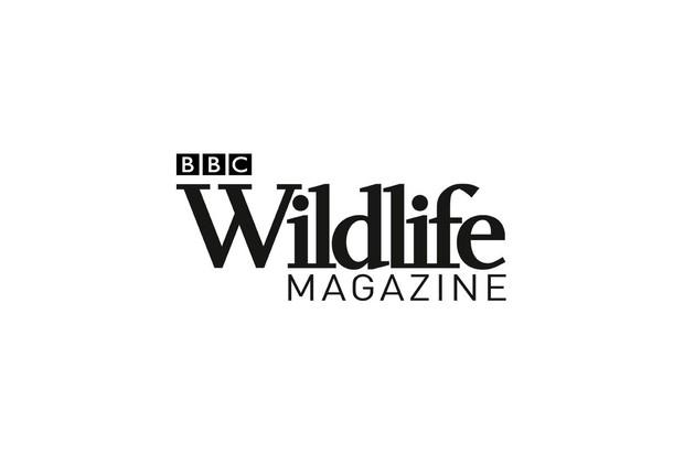 Greenland shark, British wildlife, seals,