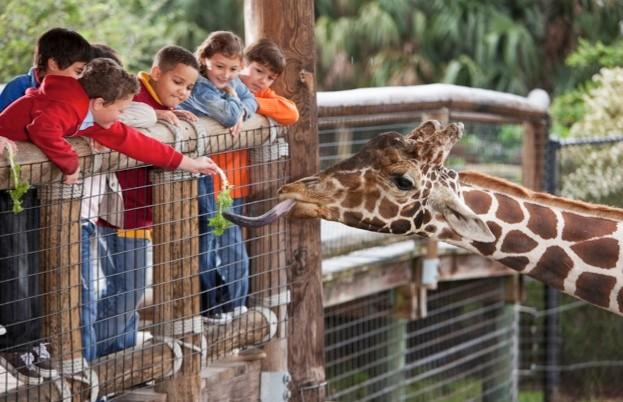 zoo_SusanChiang_iStock_623-7a615b3