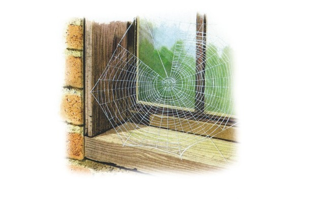 Orb-web spider. © Chris Shields