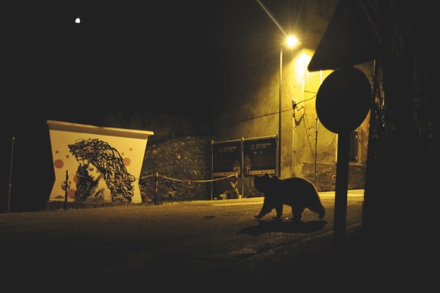 Winner 2018, Urban Wildlife, Crossing paths © Marco Colombo (Italy)/Wildlife Photographer of the Year