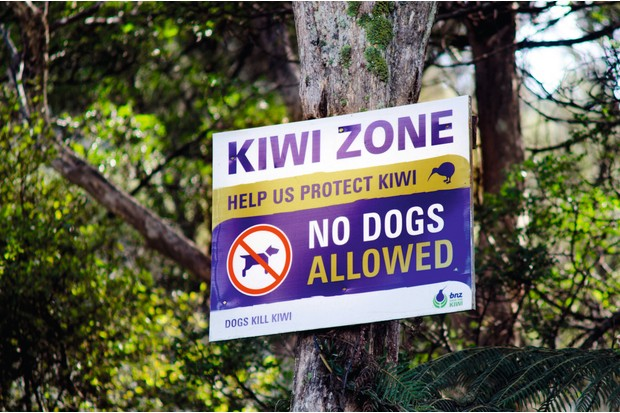 Dogs pose a danger to kiwis. © Rafael Ben-Ari/Alamy