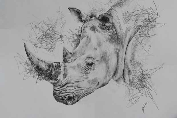 Rhino drawing from exhibition. © Kate Fields