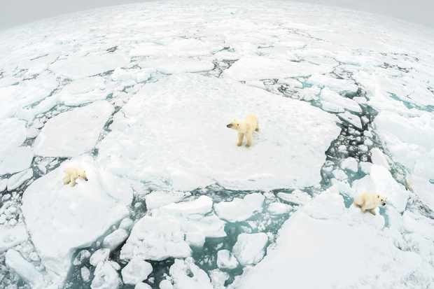 Female polar bear with her two cubs standing on fractured ice floe in Svalbard, Norway. © Richard Barrett/WWF UK