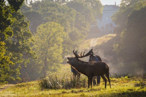 Photographers getting too close to deer. © Stephen Darlington