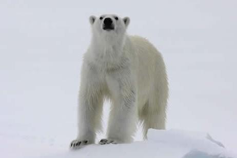 Visit the kingdom of the polar bear. © Kenny Taylor/Heatherlea