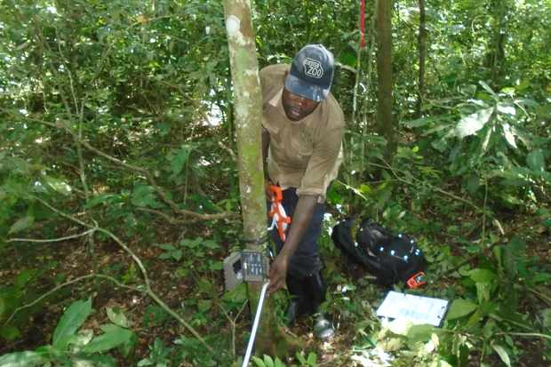 Setting up a camera trap in Semuliki National Park. © Chester Zoo