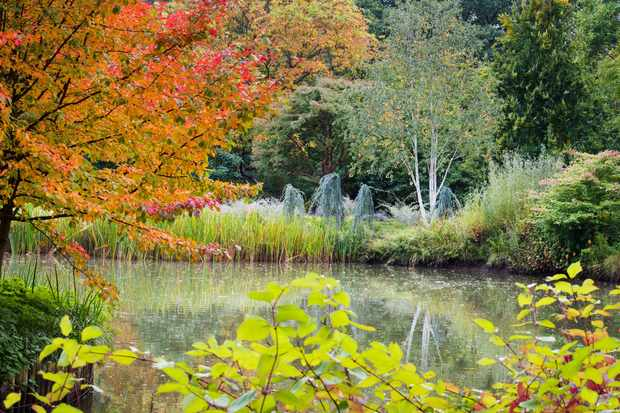 The lake at Seven Acres in autumn at RHS Wisley. © RHS