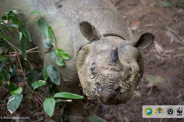 Rare photos and footage of Javan rhino, one of the world's