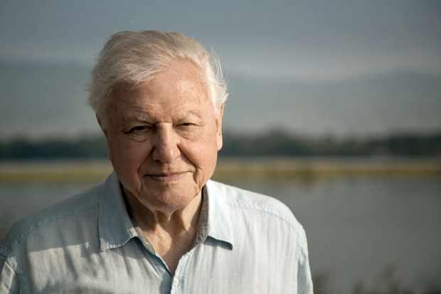 Sir David Attenborough will be presenting and narrating Dynasties. © BBC NHU/Nick Lyon