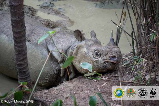 5. Javan Rhino_Photo by Robin Moore, Global Wildlife Conservation