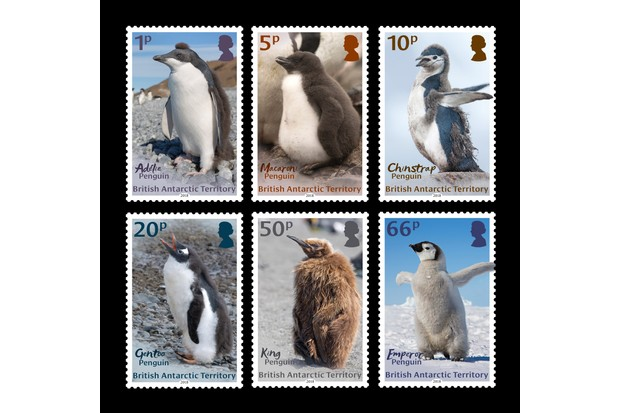 The chick penguins stamp set.