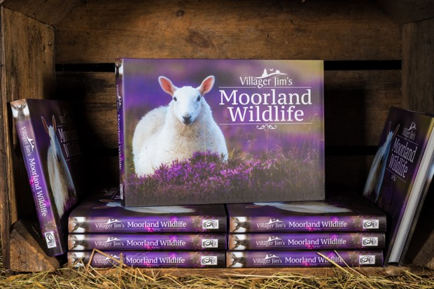 Moorland Wildlife
