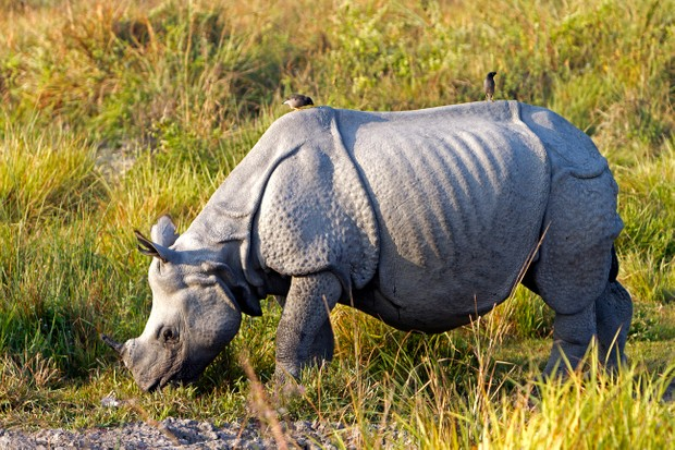 What wildlife can I see in Chitwan National Park, Nepal