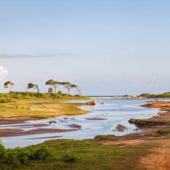 Wetlands in the Yala National Park, Sri Lanka. © T_o_m_o/Getty