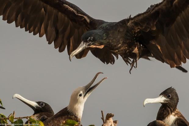 Behaviour Birds