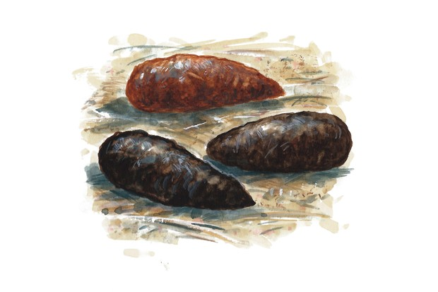 How to identify animal droppings and poo, with illustrations