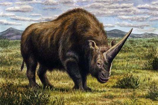 Elasmotherium sibiricum. © W. S. Van der Merwe