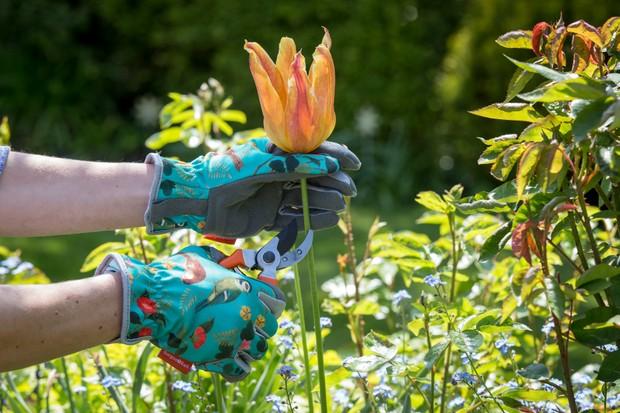 Flora and Fauna gardening gloves.