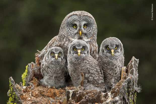 Family portrait. © Connor Stefanison/Wildlife Photographer of the Year