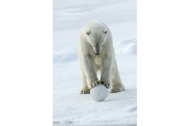 Polar bear and SnowballCam, Arctic. © BBC/John Downer Productions/Philip Dalton
