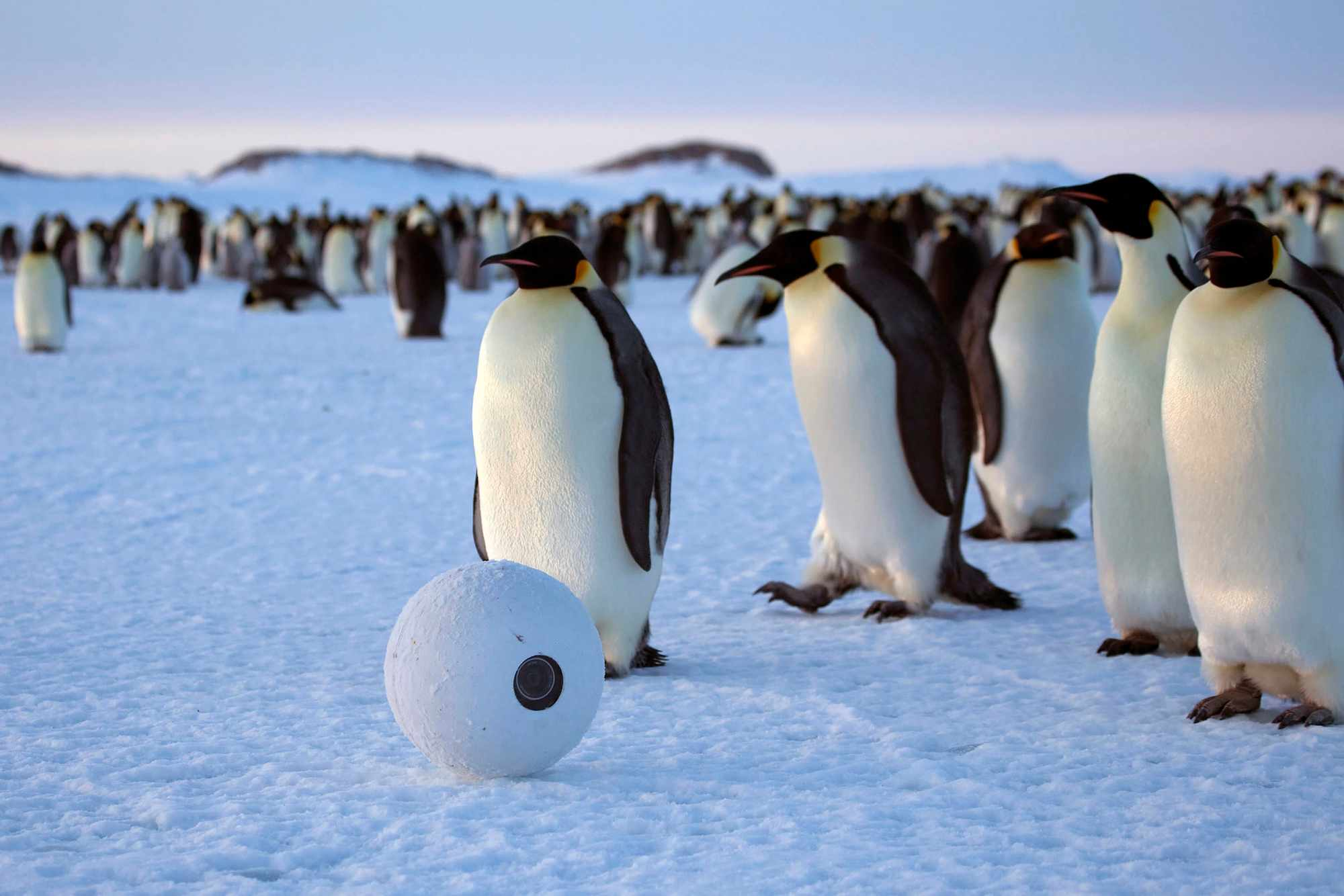 SnowballCam with emperor penguins, Antarctica. © BBC/John Downer Productions/Frederique Olivier