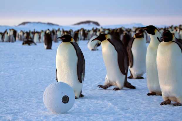 SnowballCam with emperor penguins, Antarctica. © BBC/John Downer Productions/Frederique Olivier