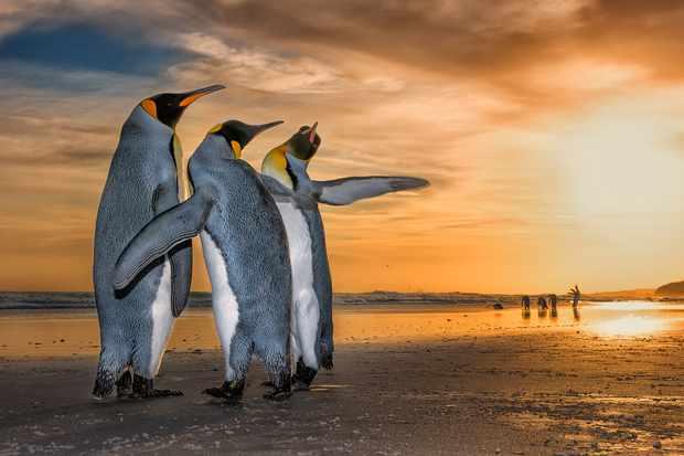 Three kings. © Wim Van Den Heever/Wildlife Photographer of the Year