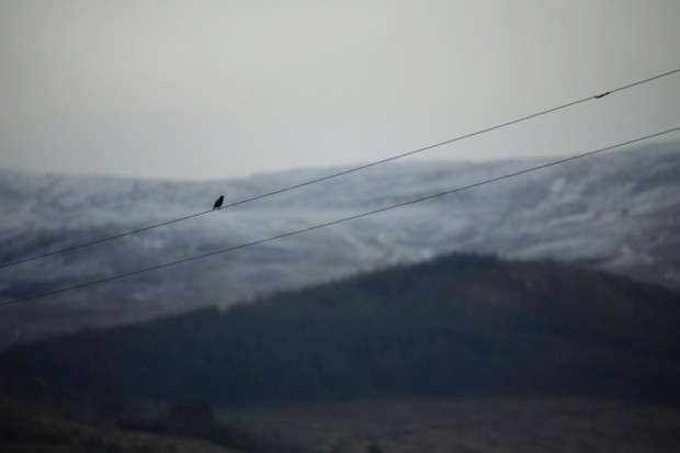 """A solitary bird perched on the wire - it was extremely cold!"" © Yusuf Akhtar"