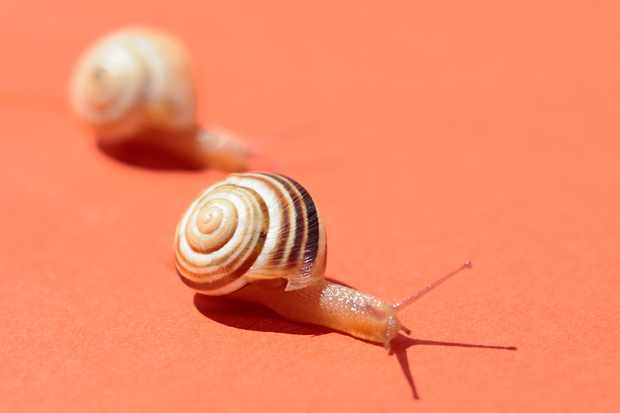 Sleepy snails meant that a snail race had to be postponed. © Drbouz/Getty