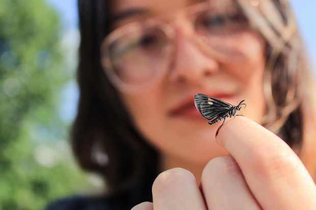 Close-up of butterfly on finger. © Santiago Baena/EyeEm/Getty
