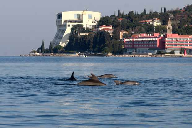 The researchers found that the two dolphin groups did not associate with each other. © Ana Have