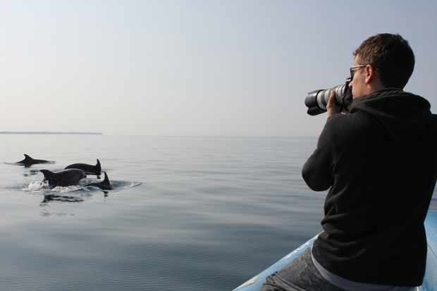 Studying the Morigenos dolphins. © Ana Have