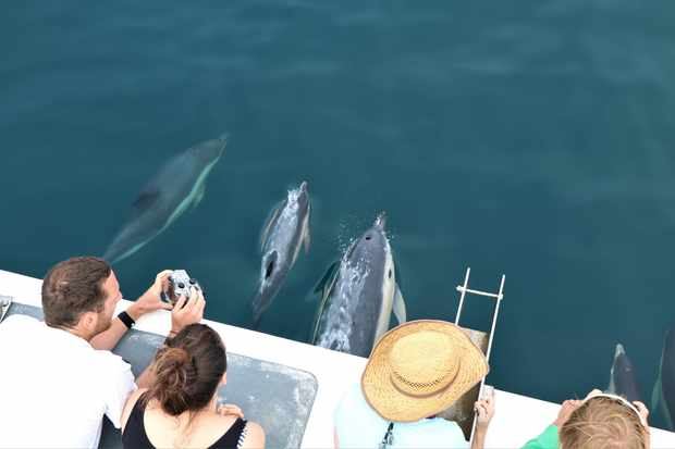 Volunteers watching dolphins off Newquay, Cornwall in August. © Newquay Seasafaris and Fishing