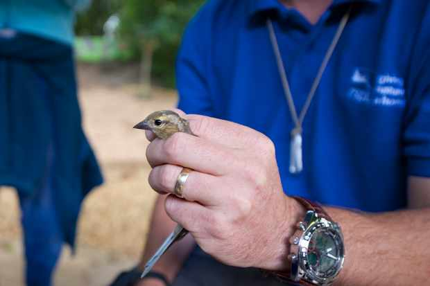 Bird ringing. © Rahul Thanki/RSPB Images