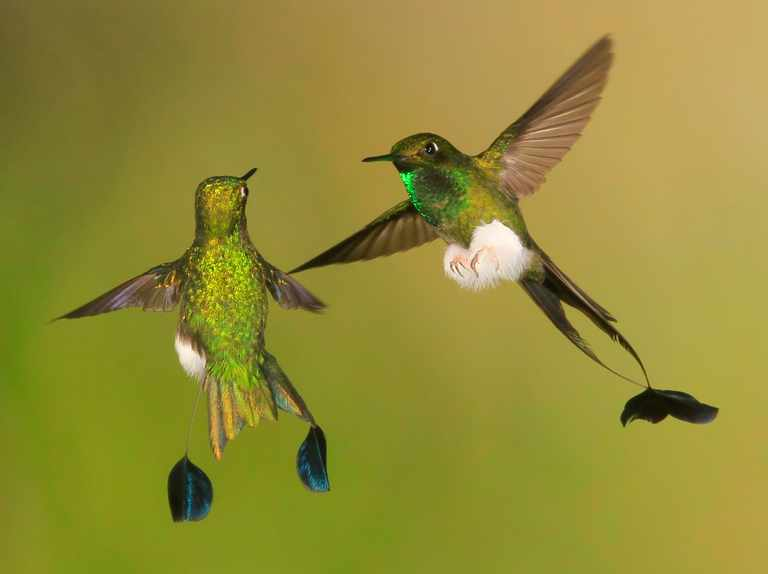Hummingbird Guide Species Facts And Where To See Discover Wildlife