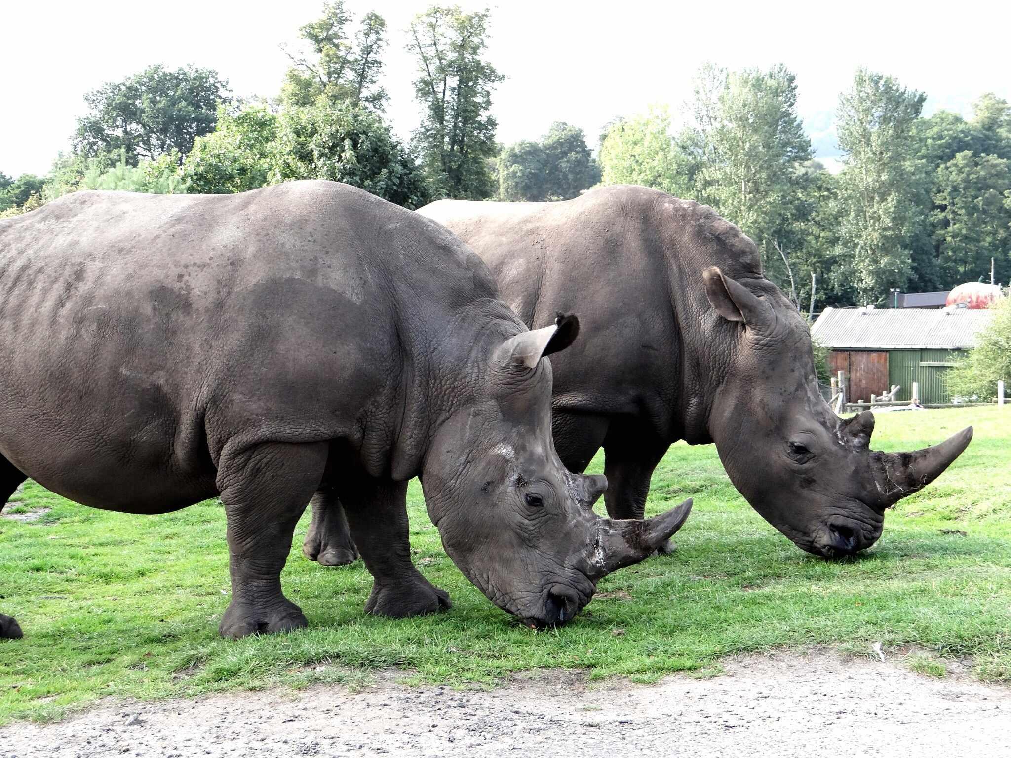 Rhinos in a zoo. © Tina Caunt/EyeEm/Getty