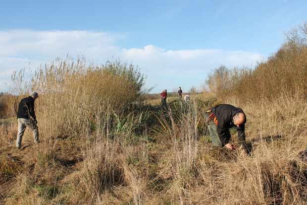 Harvesting willow. © Denmark Farm