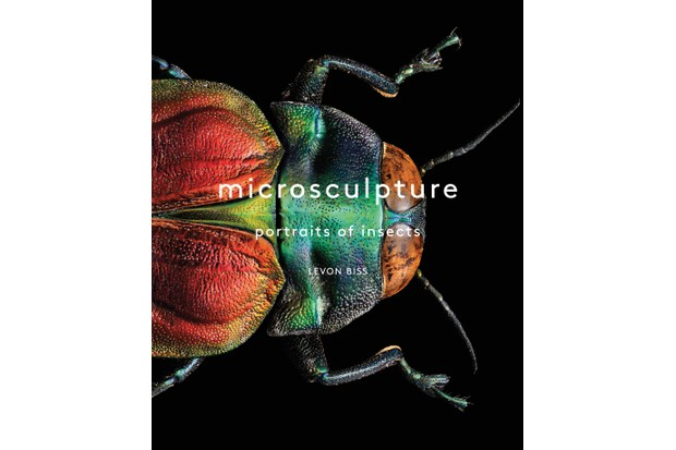 Microsculpture: Portraits of Insects © Levon Biss