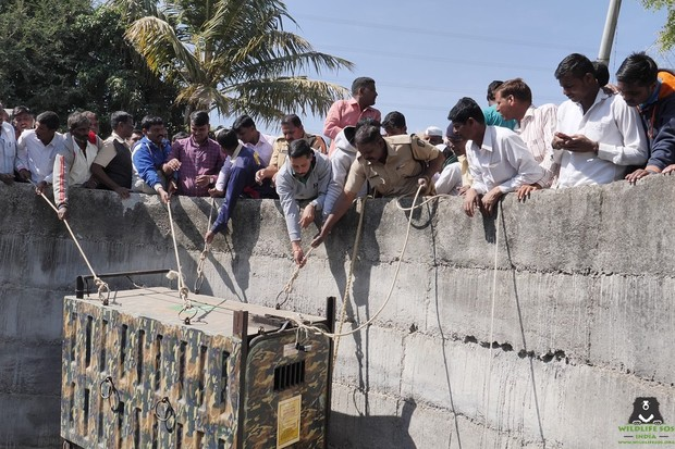 Villagers lifting the cage up. © Wildlife SOS, India