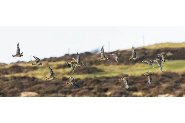 In winter, golden plover like high remote spots such as High Park on the Mynd, or here on the bare, chilly top of Corndon Hill. © Andrew Fusek Peters