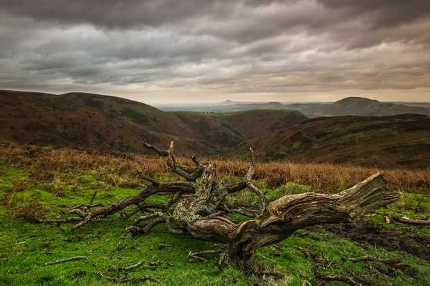 A cold December afternoon on the Burway, Long Mynd, with stormy views to the far Wrekin © Andrew Fusek Peters