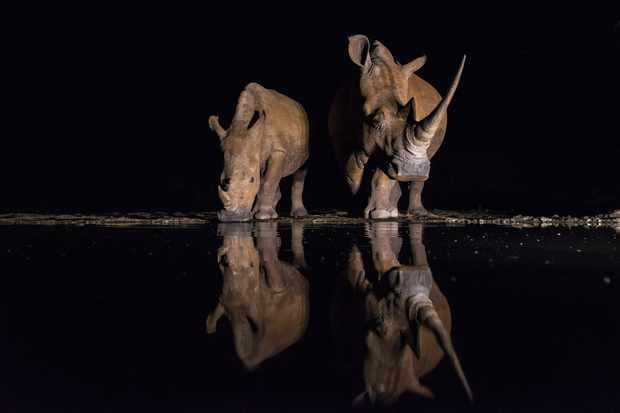 Southern white rhino, South Africa © Daryl and Sharna Balfour, South Africa