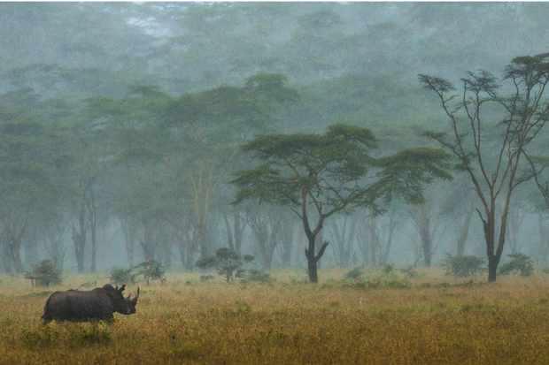 Southern white rhino, Kenya © Federico Veronesi, Italy / Kenya