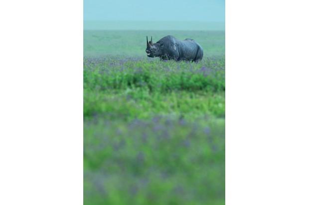 Black rhino, Tanzania © Greg du Toit, South Africa