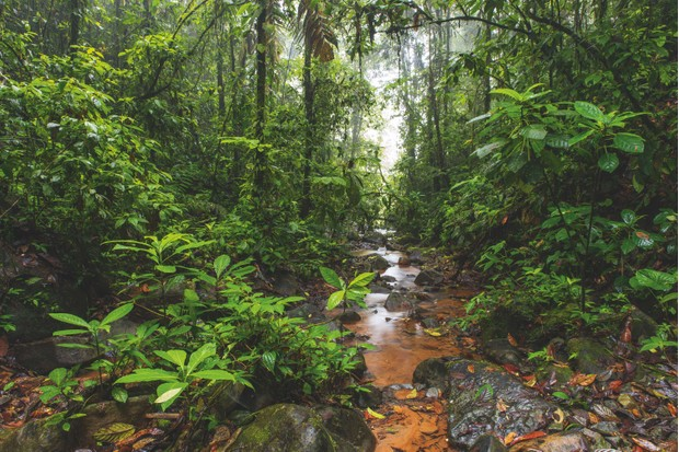 A river runs through pristine primary forests inside the El Jardin de los Suenos. The Choco is one of the wettest regions in the world, home to a huge number of species, including more than 10,000 vascular plants. ©Javier Aznar